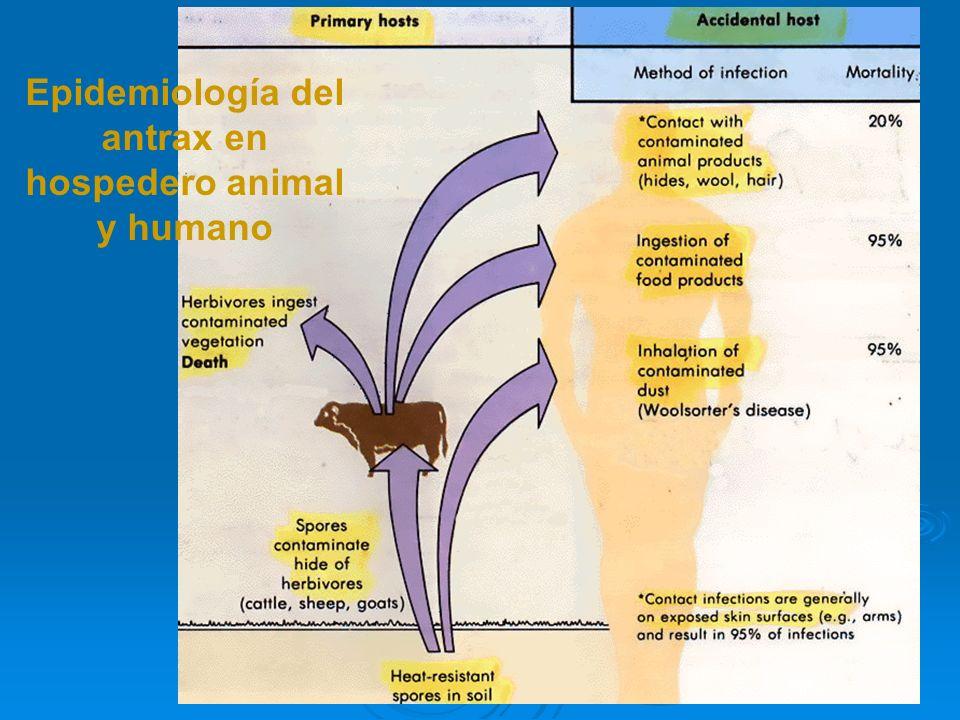 Epidemiología del antrax en hospedero animal y humano