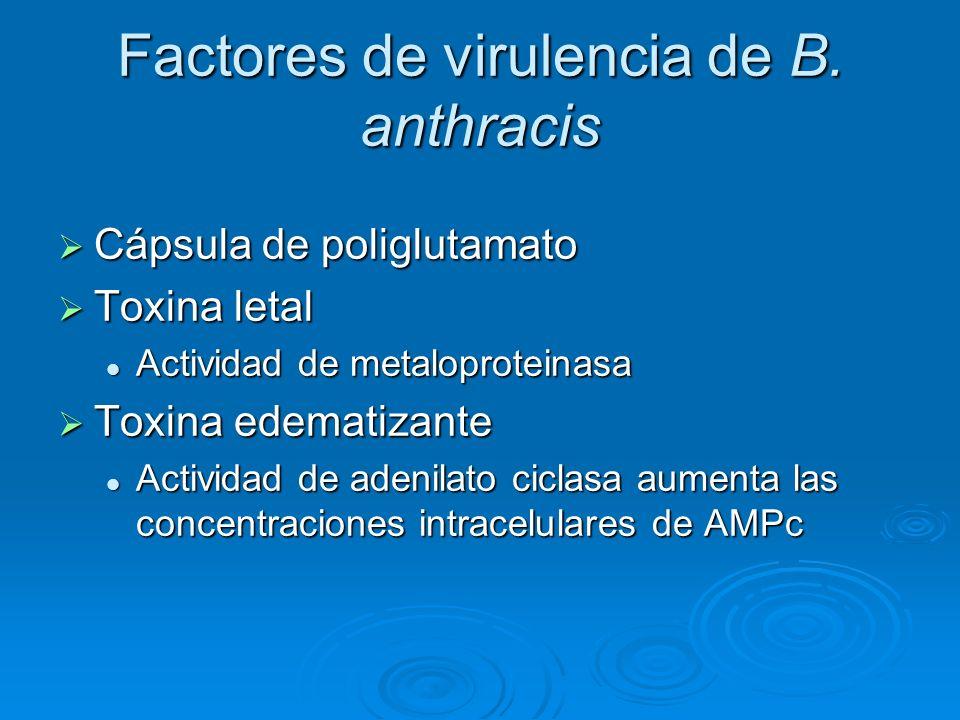 Factores de virulencia de B. anthracis Cápsula de poliglutamato Cápsula de poliglutamato Toxina letal Toxina letal Actividad de metaloproteinasa Activ