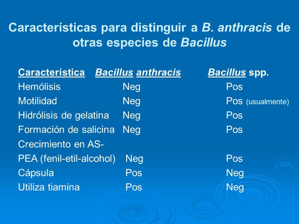 Característica Bacillus anthracis Bacillus spp. Hemólisis Neg Pos Motilidad Neg Pos (usualmente) Hidrólisis de gelatina Neg Pos Formación de salicinaN