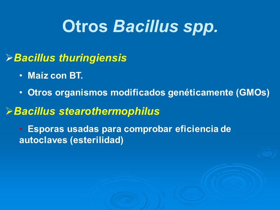 Bacillus thuringiensis Maíz con BT. Otros organismos modificados genéticamente (GMOs) Bacillus stearothermophilus Esporas usadas para comprobar eficie