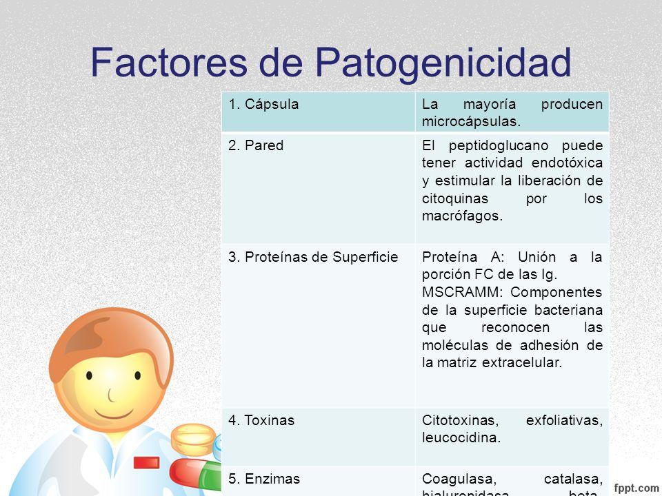 Factores de Patogenicidad 1. CápsulaLa mayoría producen microcápsulas. 2. ParedEl peptidoglucano puede tener actividad endotóxica y estimular la liber