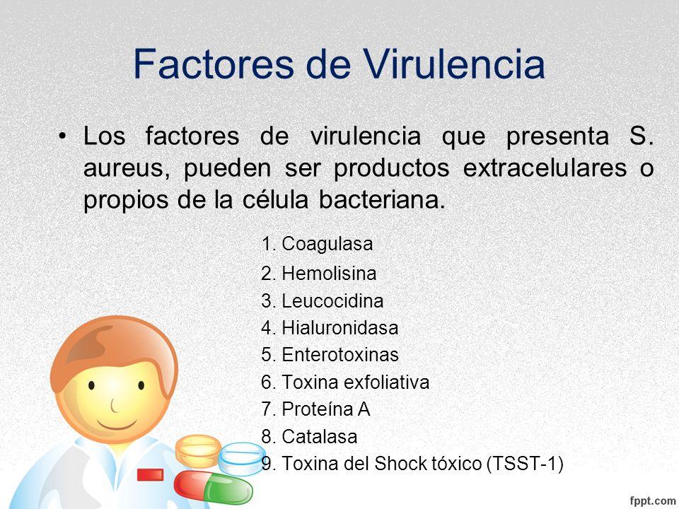 Factores de Virulencia Los factores de virulencia que presenta S. aureus, pueden ser productos extracelulares o propios de la célula bacteriana. 1. Co