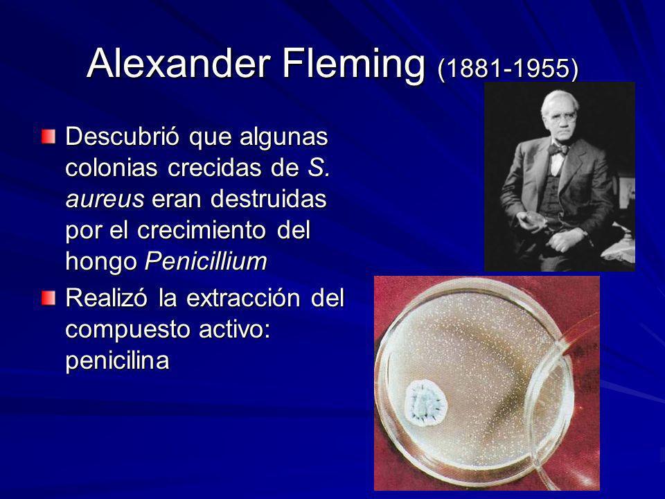Alexander Fleming (1881-1955) Descubrió que algunas colonias crecidas de S. aureus eran destruidas por el crecimiento del hongo Penicillium Realizó la