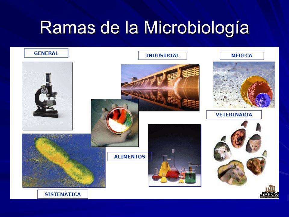 Ejemplo: Staphylococcus aureus