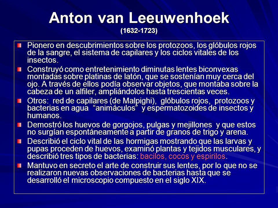 Anton van Leeuwenhoek (1632-1723) Pionero en descubrimientos sobre los protozoos, los glóbulos rojos de la sangre, el sistema de capilares y los ciclo