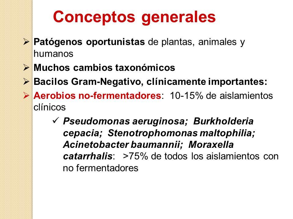 Patógenos oportunistas de plantas, animales y humanos Muchos cambios taxonómicos Bacilos Gram-Negativo, clínicamente importantes: Aerobios no-fermenta