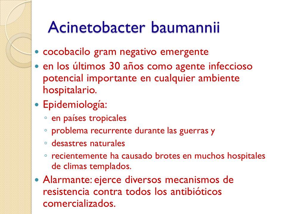 cocobacilo gram negativo emergente en los últimos 30 años como agente infeccioso potencial importante en cualquier ambiente hospitalario. Epidemiologí