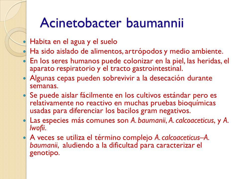 Acinetobacter baumannii Habita en el agua y el suelo Ha sido aislado de alimentos, artrópodos y medio ambiente. En los seres humanos puede colonizar e