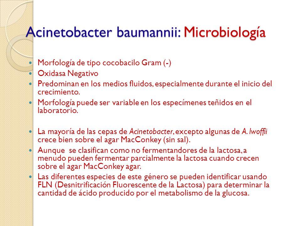 Acinetobacter baumannii: Microbiología Morfología de tipo cocobacilo Gram (-) Oxidasa Negativo Predominan en los medios fluidos, especialmente durante