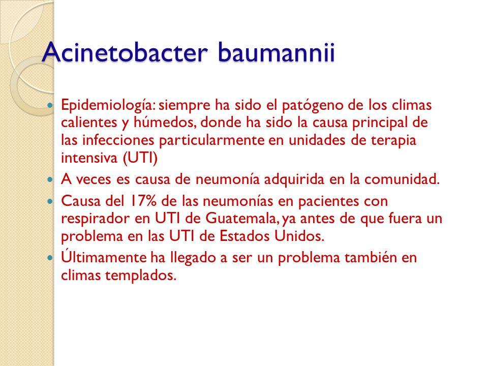 Acinetobacter baumannii Epidemiología: siempre ha sido el patógeno de los climas calientes y húmedos, donde ha sido la causa principal de las infeccio