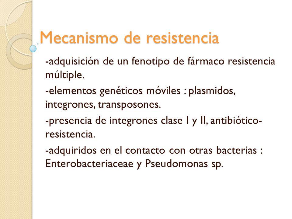 Mecanismo de resistencia -adquisición de un fenotipo de fármaco resistencia múltiple. -elementos genéticos móviles : plasmidos, integrones, transposon