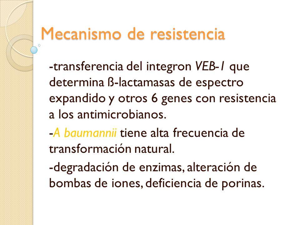 Mecanismo de resistencia -transferencia del integron VEB-1 que determina ß-lactamasas de espectro expandido y otros 6 genes con resistencia a los anti