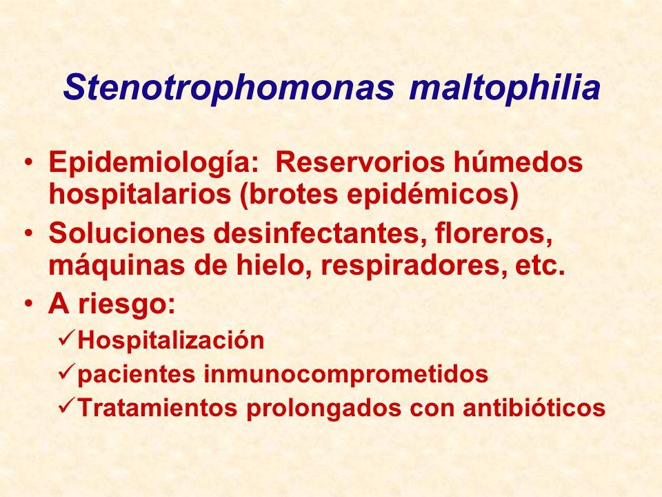 Stenotrophomonas maltophilia Epidemiología: Reservorios húmedos hospitalarios (brotes epidémicos) Soluciones desinfectantes, floreros, máquinas de hie