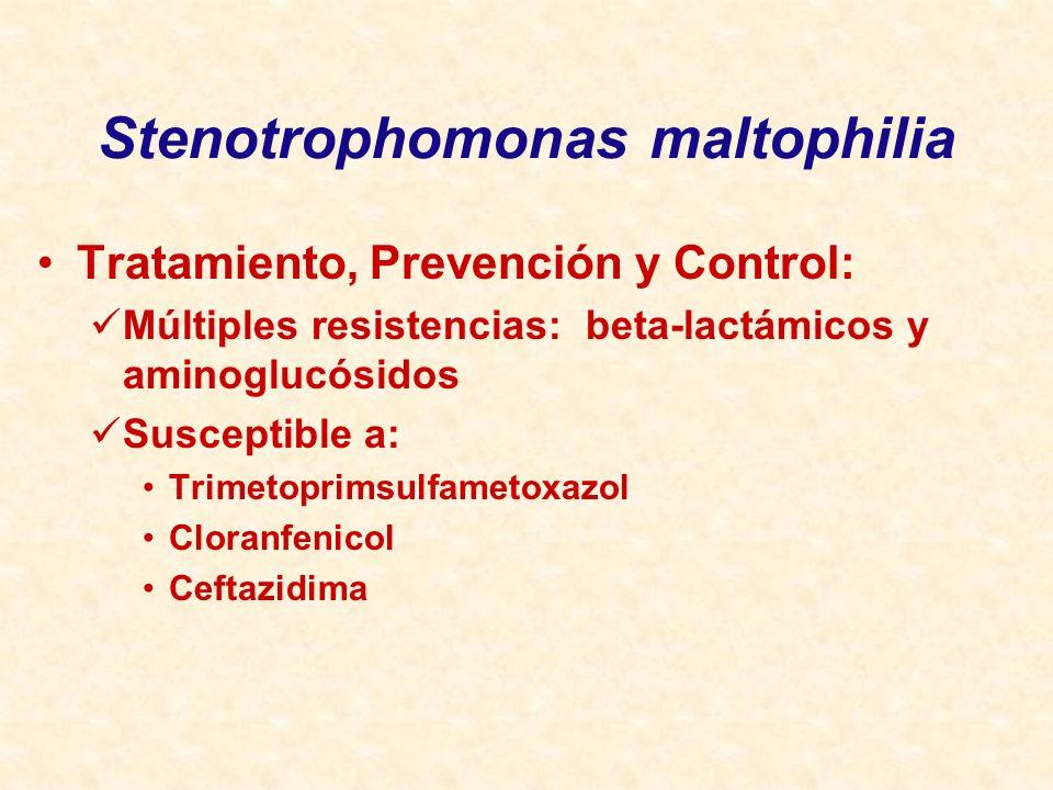 Stenotrophomonas maltophilia Tratamiento, Prevención y Control: Múltiples resistencias: beta-lactámicos y aminoglucósidos Susceptible a: Trimetoprimsu