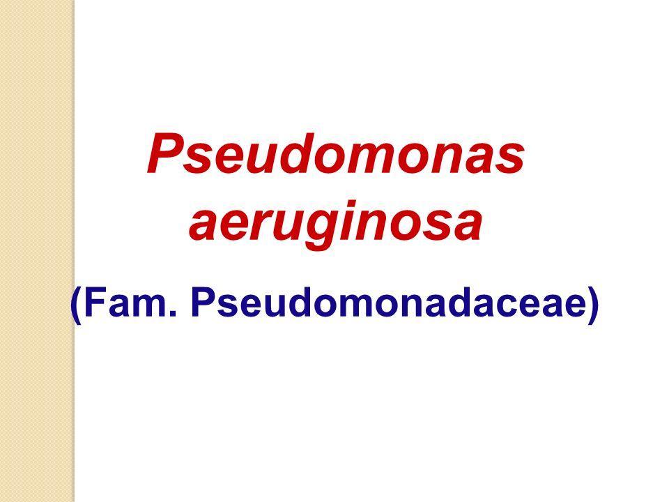 Pseudomonas aeruginosa (Fam. Pseudomonadaceae)