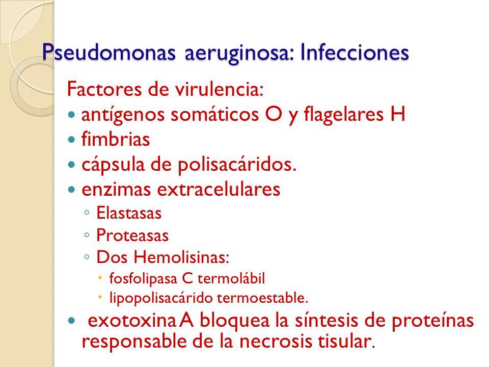Pseudomonas aeruginosa: Infecciones Factores de virulencia: antígenos somáticos O y flagelares H fimbrias cápsula de polisacáridos. enzimas extracelul