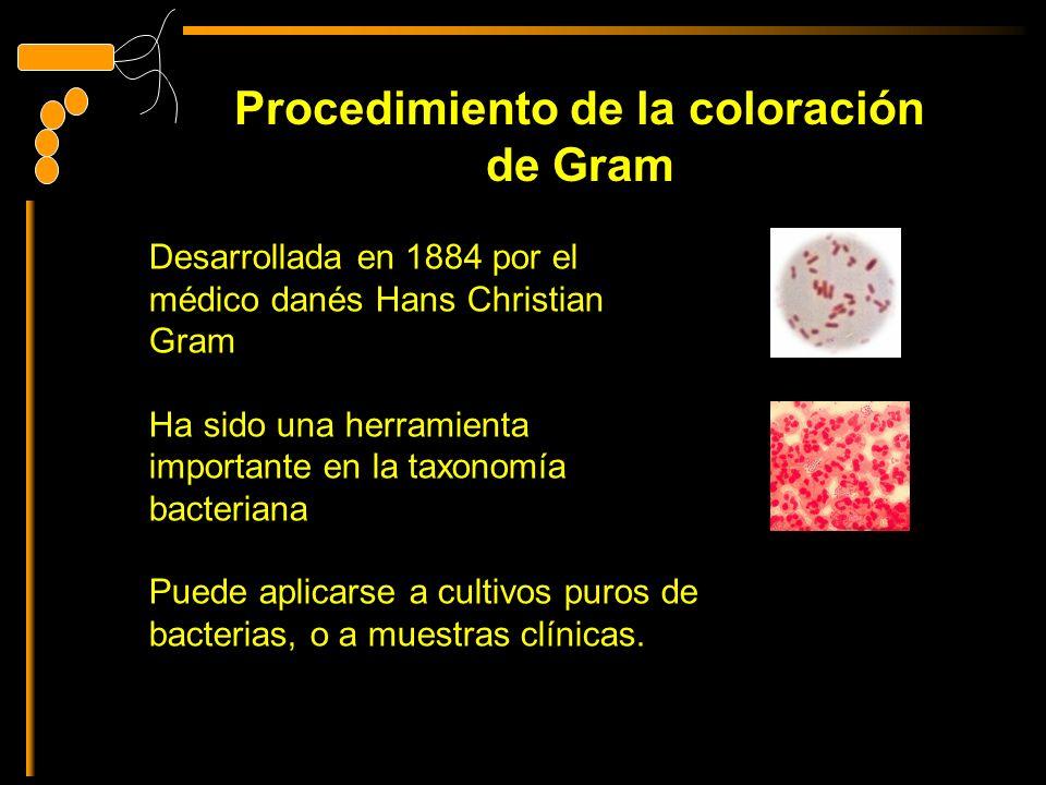 Procedimiento de la coloración de Gram Desarrollada en 1884 por el médico danés Hans Christian Gram Ha sido una herramienta importante en la taxonomía bacteriana Puede aplicarse a cultivos puros de bacterias, o a muestras clínicas.