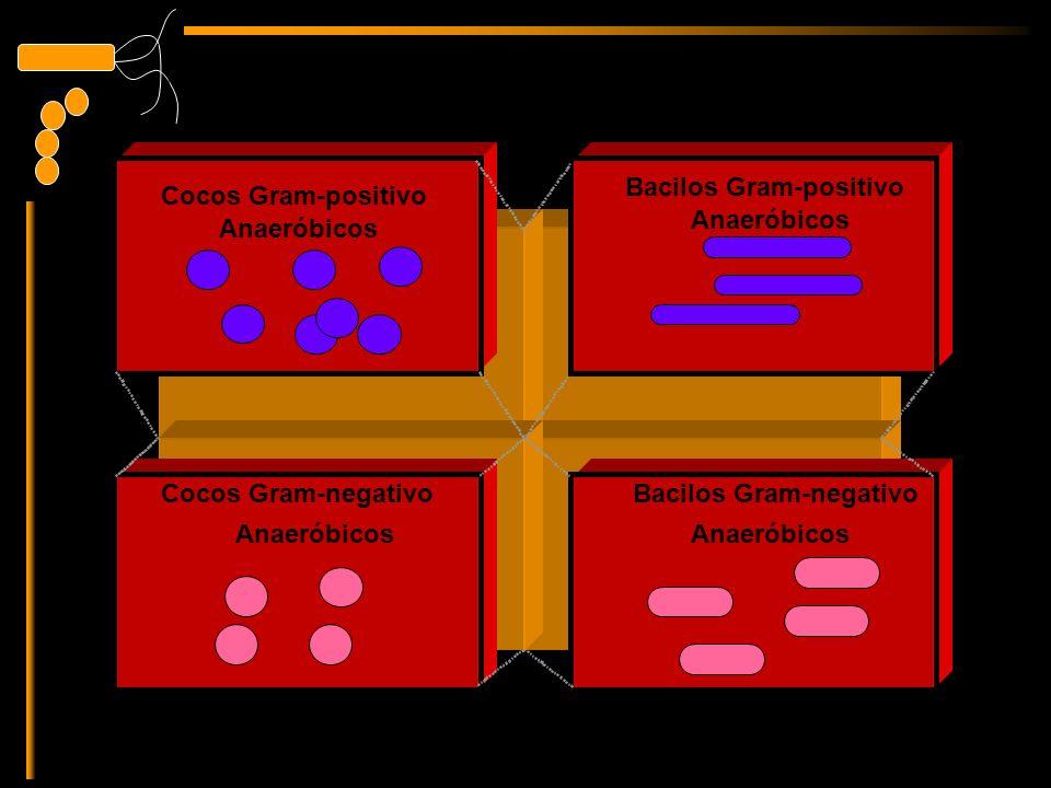 Gram-positive cocci Anaeróbicos Bacilos Gram-positivo Anaeróbicos Bacilos Gram-negativo Anaeróbicos Cocos Gram-positivo Anaeróbicos Cocos Gram-negativo