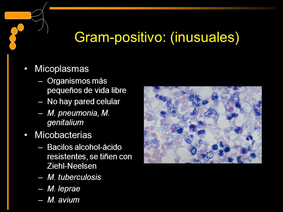 Gram-positivo: (inusuales) Micoplasmas –Organismos más pequeños de vida libre –No hay pared celular –M. pneumonia, M. genitalium Micobacterias –Bacilo