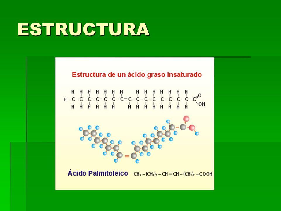 TRIGLICÉRIDO Corresponde a la unión de tres ácidos grasos con una molécula de glicerol Corresponde a la unión de tres ácidos grasos con una molécula de glicerol