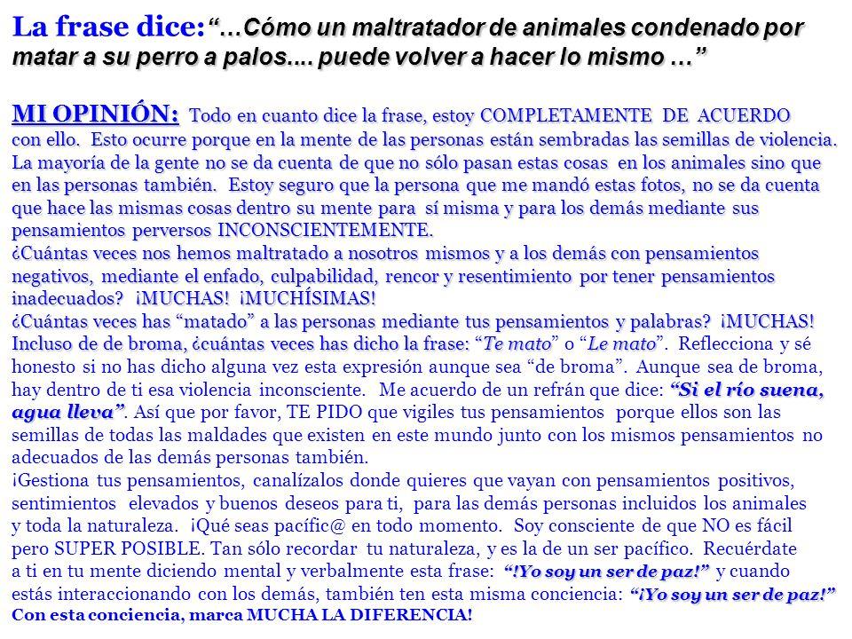 …Cómo un maltratador de animales condenado por La frase dice: …Cómo un maltratador de animales condenado por matar a su perro a palos.... puede volver
