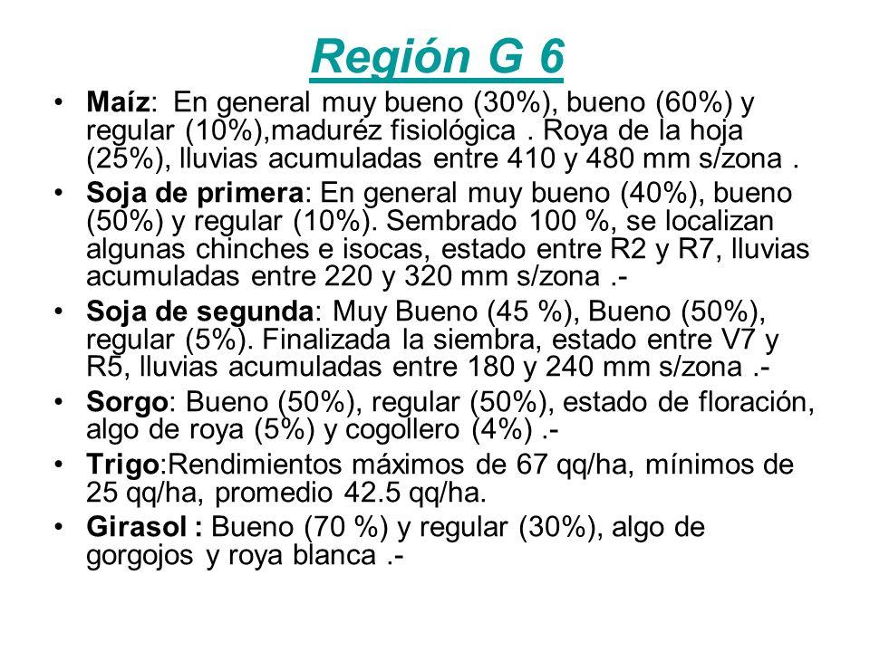 Región G 6 Maíz: En general muy bueno (30%), bueno (60%) y regular (10%),maduréz fisiológica.