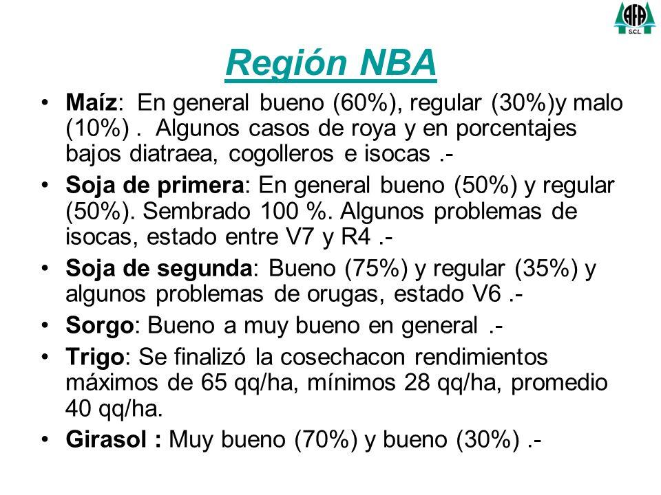 Región Norte Maíz: En general bueno (55%), regular (30%) y malo (15%).