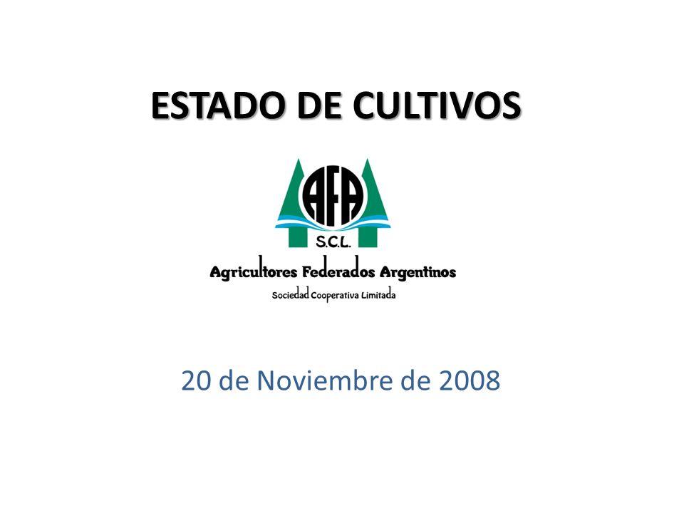 ESTADO DE CULTIVOS 20 de Noviembre de 2008