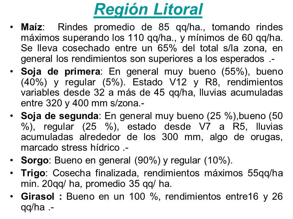 Región Litoral Maíz: Rindes promedio de 85 qq/ha., tomando rindes máximos superando los 110 qq/ha., y mínimos de 60 qq/ha.