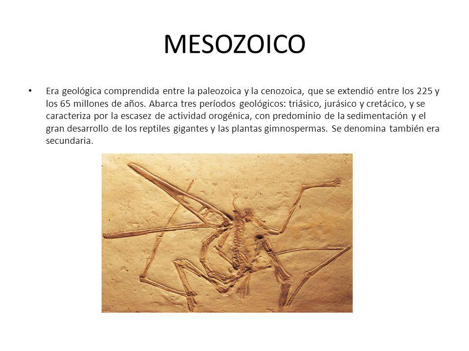 MESOZOICO Era geológica comprendida entre la paleozoica y la cenozoica, que se extendió entre los 225 y los 65 millones de años. Abarca tres períodos