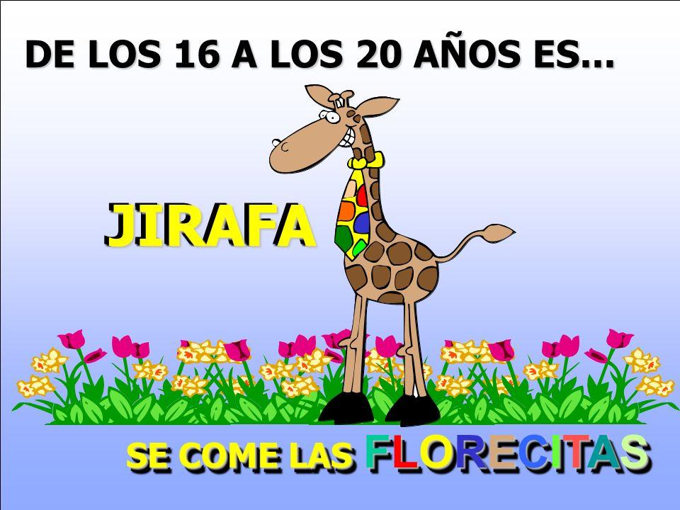 DE LOS 16 A LOS 20 AÑOS ES... JIRAFAJIRAFA SE COME LAS FLORECITAS