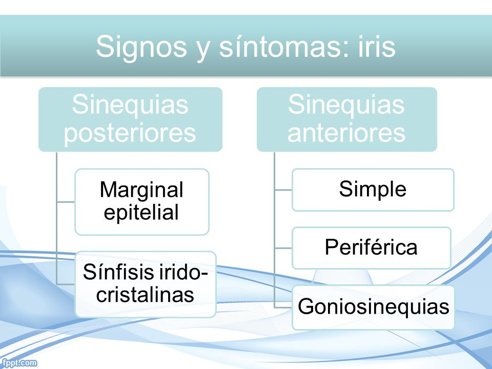 Sinequias posteriores Marginal epitelial Sínfisis irido- cristalinas Sinequias anteriores Simple Periférica Goniosinequias Signos y síntomas: iris