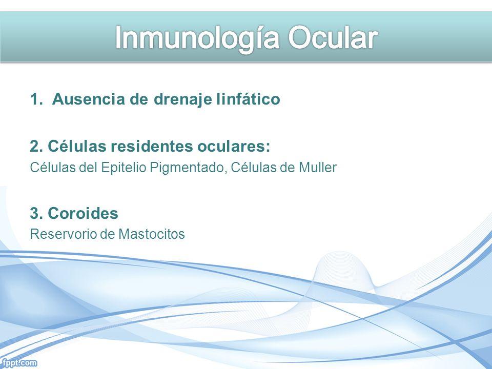1. Ausencia de drenaje linfático 2. Células residentes oculares: Células del Epitelio Pigmentado, Células de Muller 3. Coroides Reservorio de Mastocit