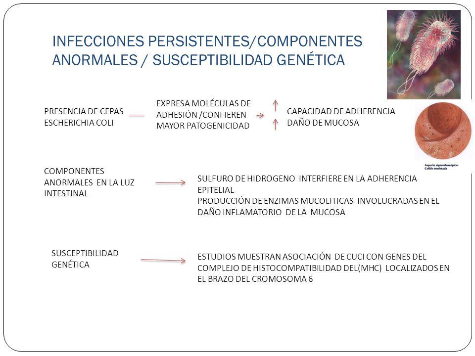 INFECCIONES PERSISTENTES/COMPONENTES ANORMALES / SUSCEPTIBILIDAD GENÉTICA PRESENCIA DE CEPAS ESCHERICHIA COLI EXPRESA MOLÉCULAS DE ADHESIÓN /CONFIEREN