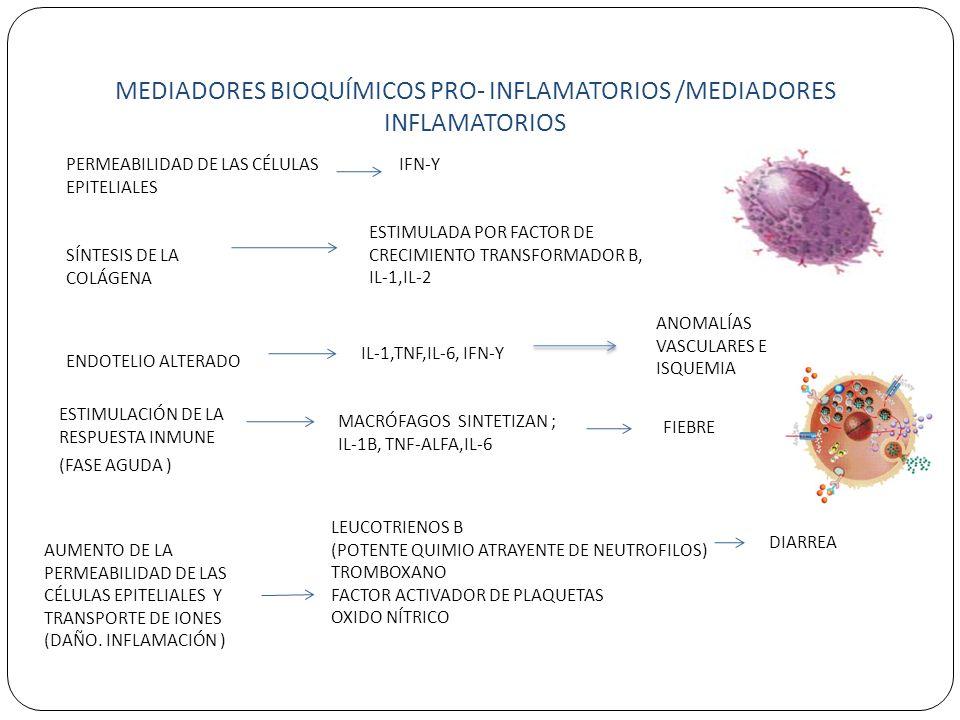 MEDIADORES BIOQUÍMICOS PRO- INFLAMATORIOS /MEDIADORES INFLAMATORIOS PERMEABILIDAD DE LAS CÉLULAS EPITELIALES IFN-Y SÍNTESIS DE LA COLÁGENA ESTIMULADA