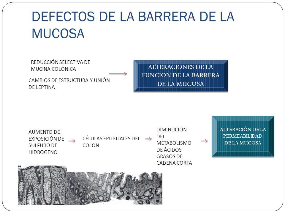 DEFECTOS DE LA BARRERA DE LA MUCOSA REDUCCIÓN SELECTIVA DE MUCINA COLÓNICA CAMBIOS DE ESTRUCTURA Y UNIÓN DE LEPTINA ALTERACIONES DE LA FUNCION DE LA B