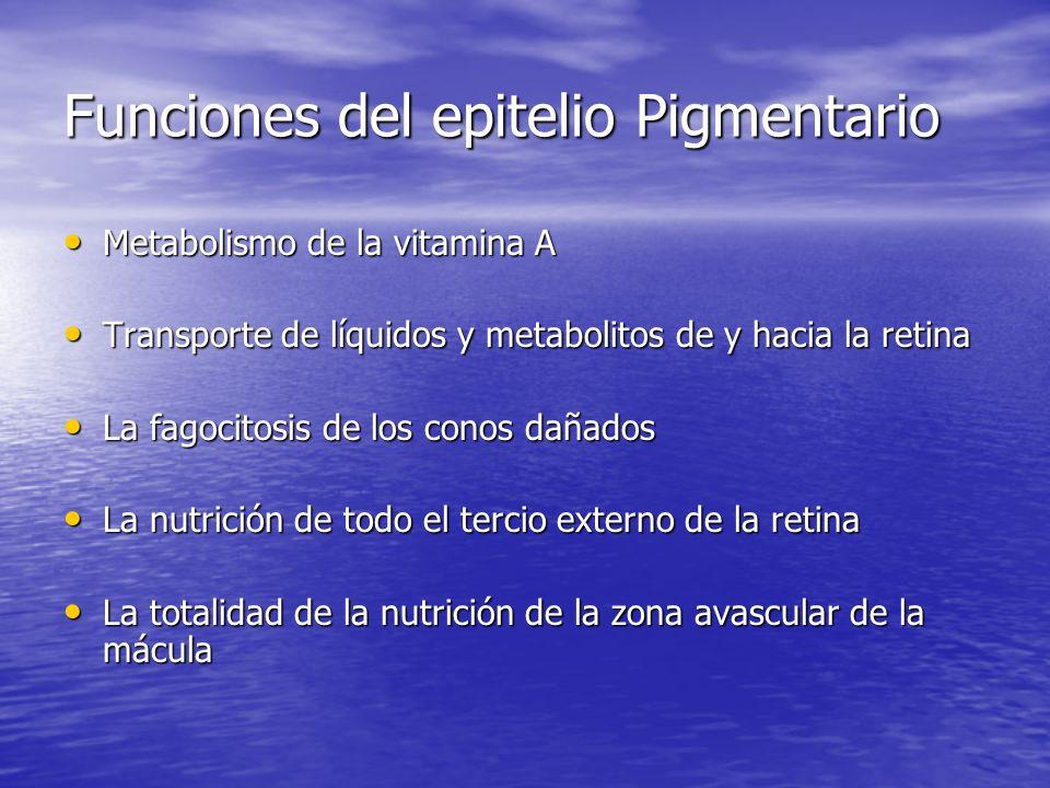 ALTERACIONES QUE SUFRE EL COMPLEJO CBE Coroides.Presenta isquemia Coroides.