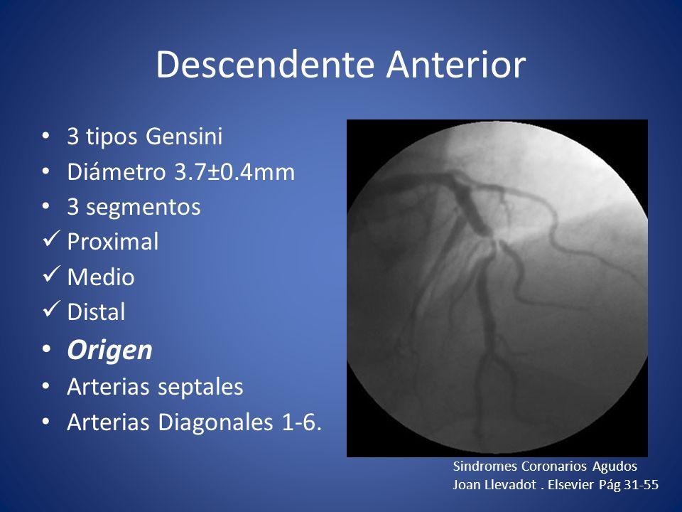 Descendente Anterior 3 tipos Gensini Diámetro 3.7±0.4mm 3 segmentos Proximal Medio Distal Origen Arterias septales Arterias Diagonales 1-6. Sindromes