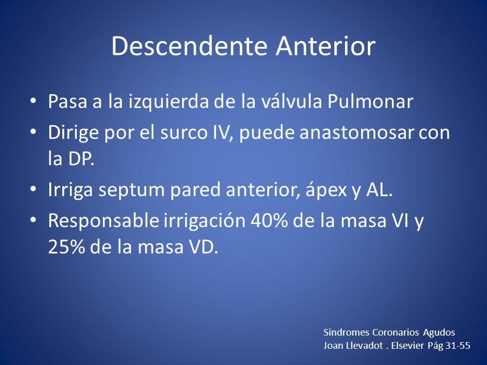 Descendente Anterior Pasa a la izquierda de la válvula Pulmonar Dirige por el surco IV, puede anastomosar con la DP. Irriga septum pared anterior, ápe
