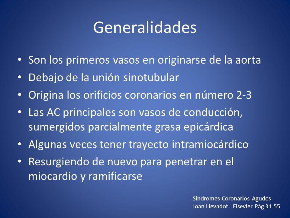 Generalidades Son los primeros vasos en originarse de la aorta Debajo de la unión sinotubular Origina los orificios coronarios en número 2-3 Las AC pr