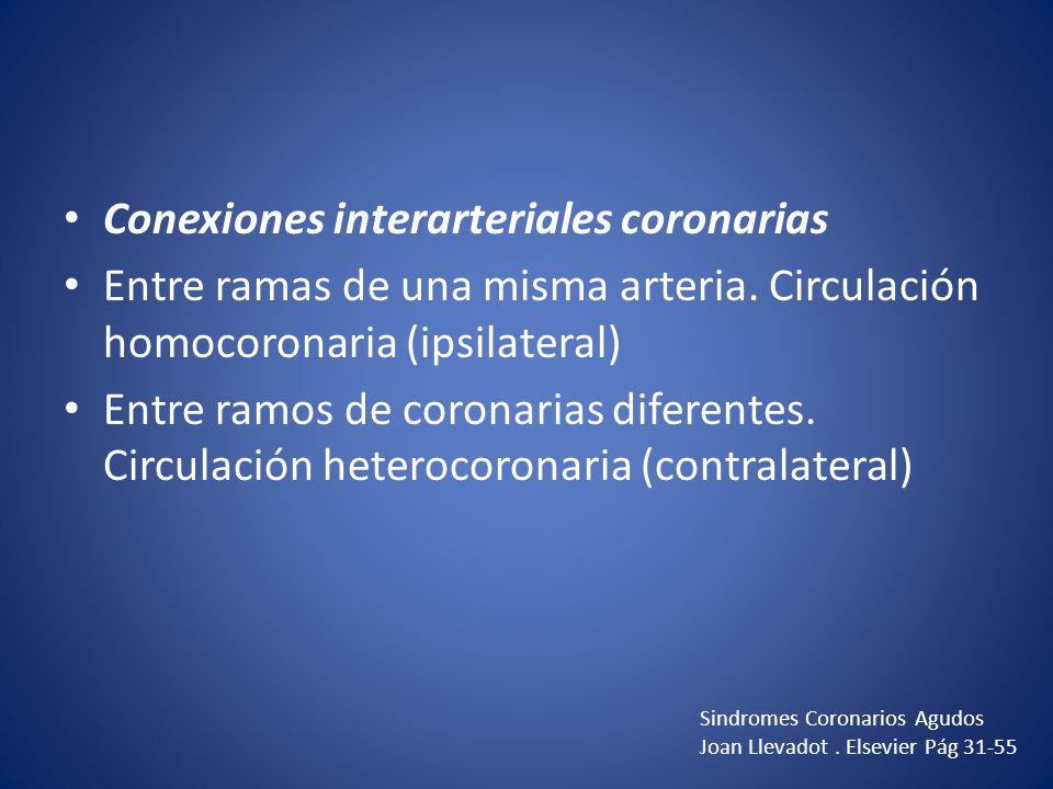 Conexiones interarteriales coronarias Entre ramas de una misma arteria. Circulación homocoronaria (ipsilateral) Entre ramos de coronarias diferentes.