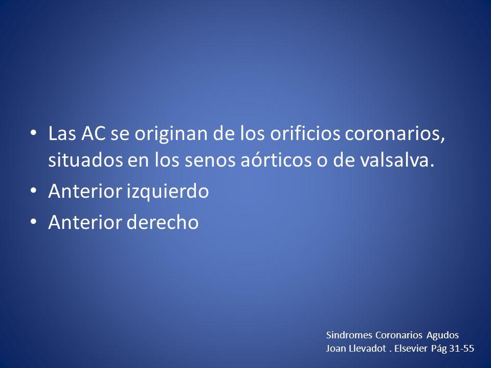 Las AC se originan de los orificios coronarios, situados en los senos aórticos o de valsalva. Anterior izquierdo Anterior derecho Sindromes Coronarios