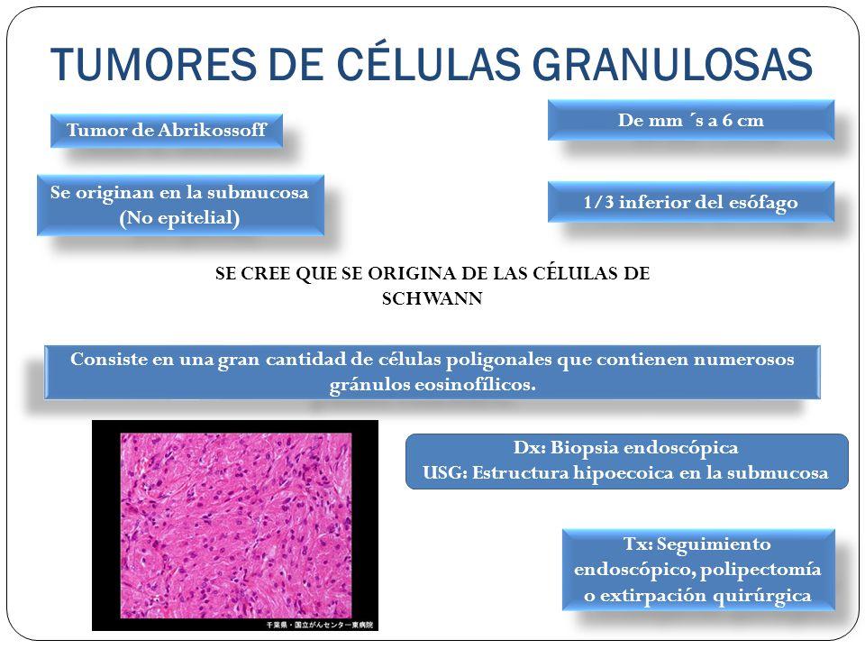 TUMORES DE CÉLULAS GRANULOSAS Tumor de Abrikossoff Se originan en la submucosa (No epitelial) 1/3 inferior del esófago SE CREE QUE SE ORIGINA DE LAS C