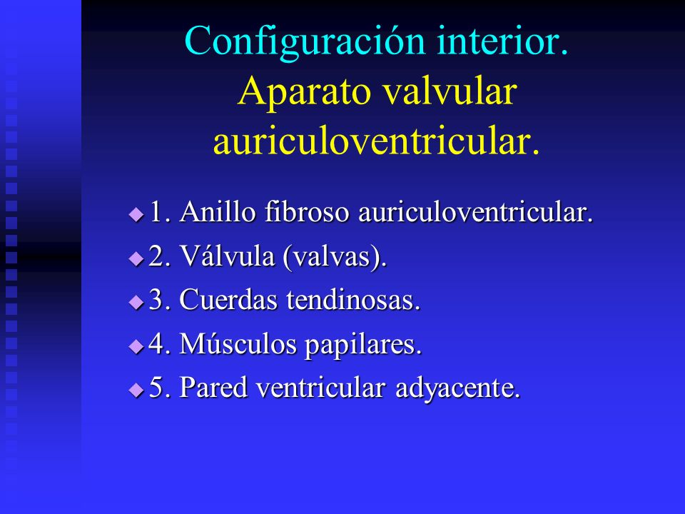 Configuración interior. Aparato valvular auriculoventricular. 1. Anillo fibroso auriculoventricular. 1. Anillo fibroso auriculoventricular. 2. Válvula