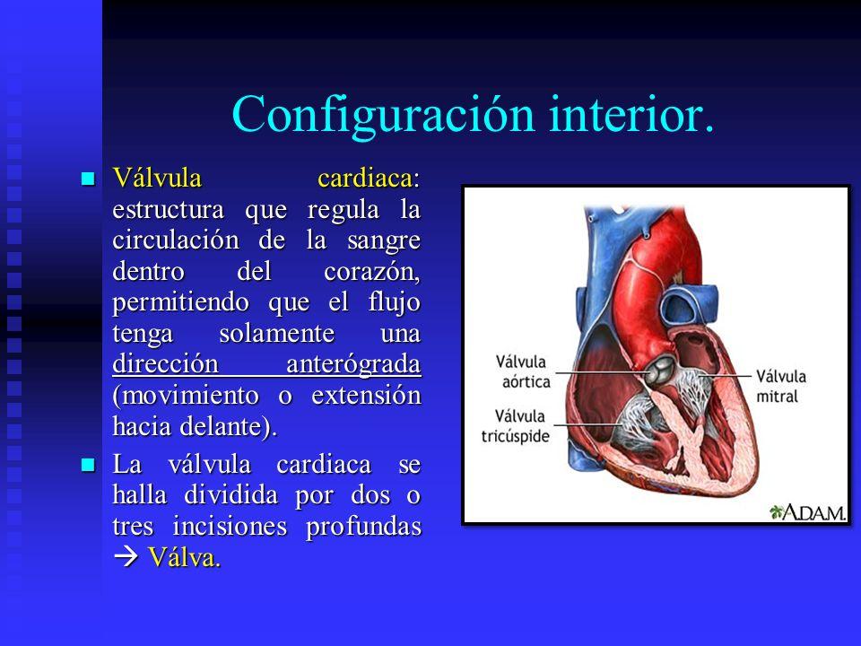 Configuración interior. Válvula cardiaca: estructura que regula la circulación de la sangre dentro del corazón, permitiendo que el flujo tenga solamen