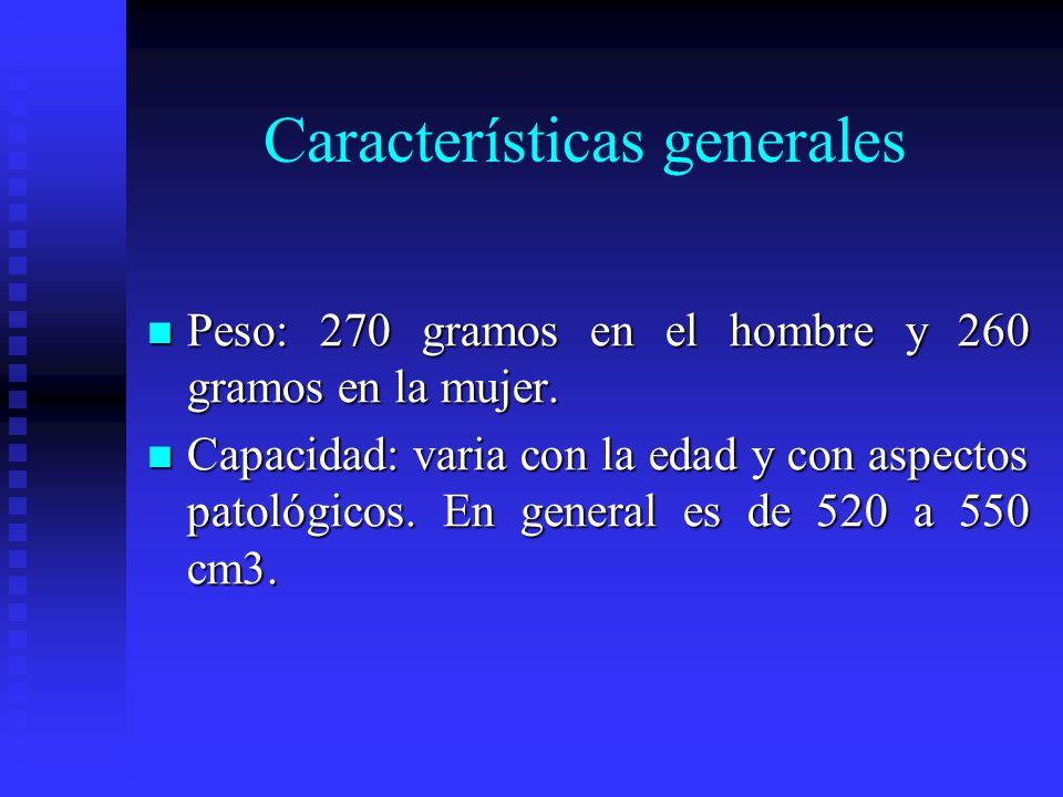 Características generales Peso: 270 gramos en el hombre y 260 gramos en la mujer. Peso: 270 gramos en el hombre y 260 gramos en la mujer. Capacidad: v