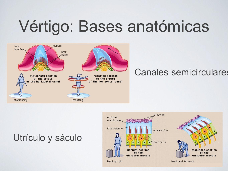 Canales semicirculares Utrículo y sáculo