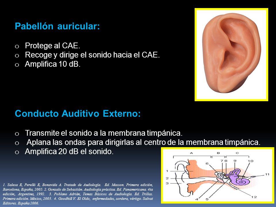 Pabellón auricular: o Protege al CAE. o Recoge y dirige el sonido hacia el CAE. o Amplifica 10 dB. Conducto Auditivo Externo: o Transmite el sonido a