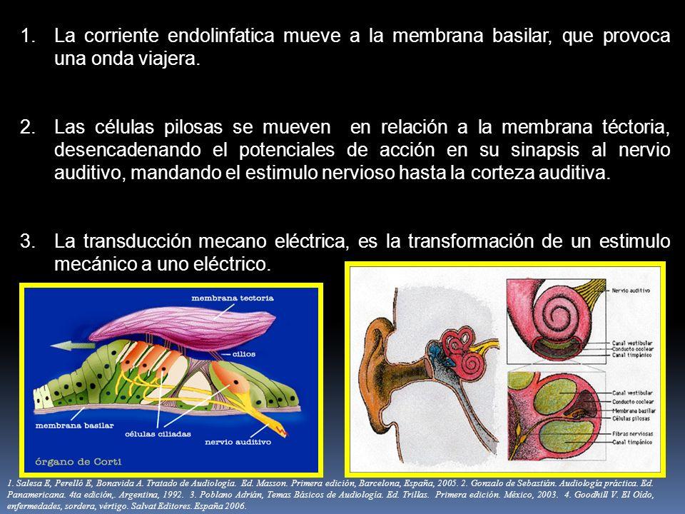 1.La corriente endolinfatica mueve a la membrana basilar, que provoca una onda viajera. 2.Las células pilosas se mueven en relación a la membrana téct