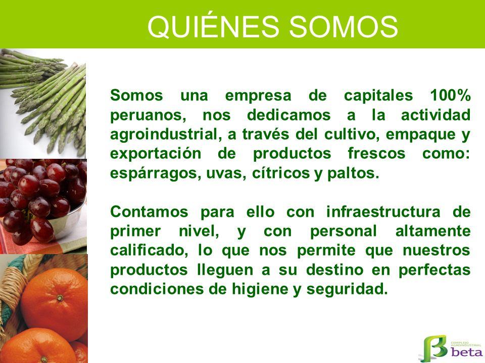 QUIÉNES SOMOS Somos una empresa de capitales 100% peruanos, nos dedicamos a la actividad agroindustrial, a través del cultivo, empaque y exportación d